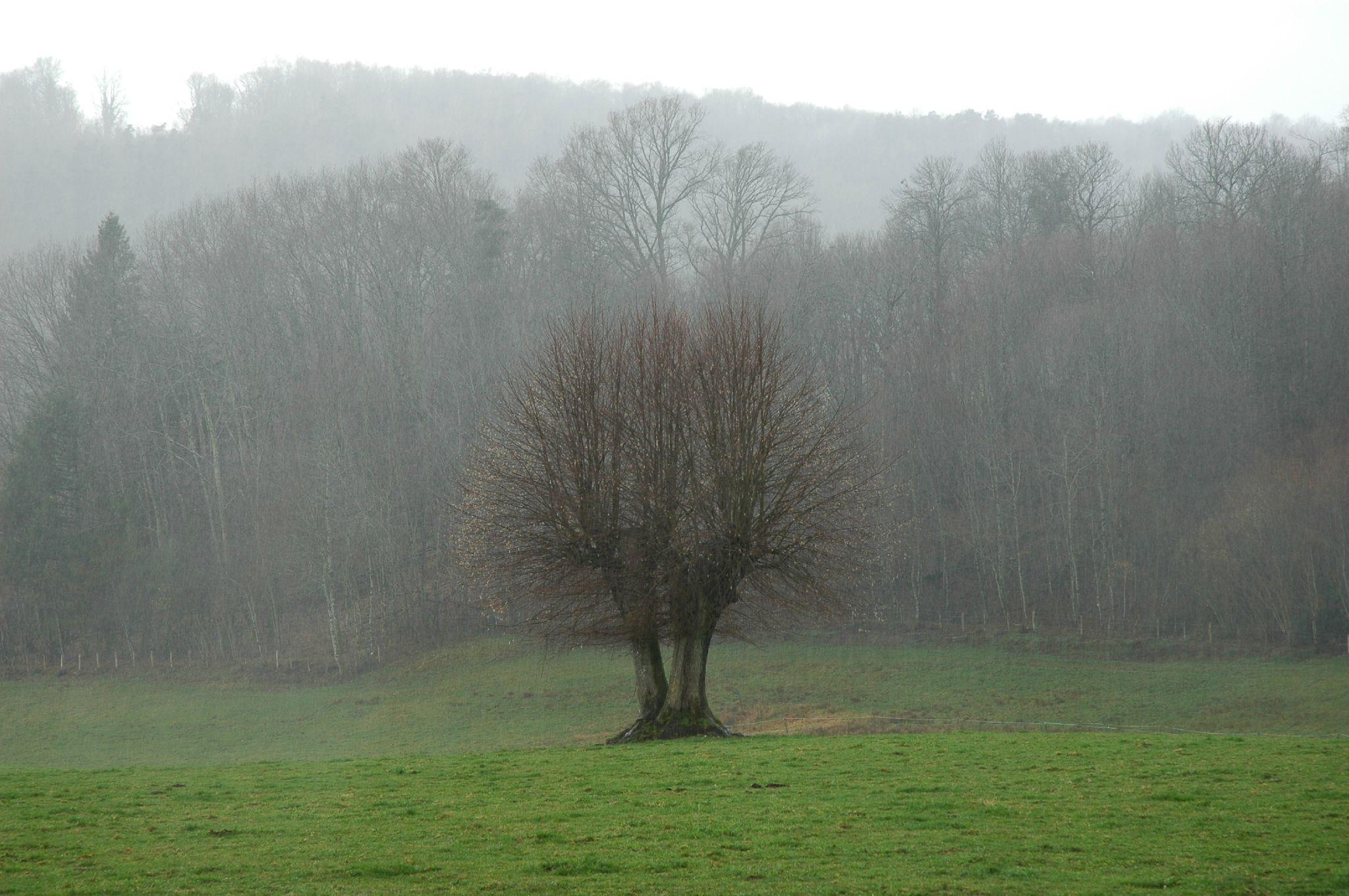 Barrière de pluie