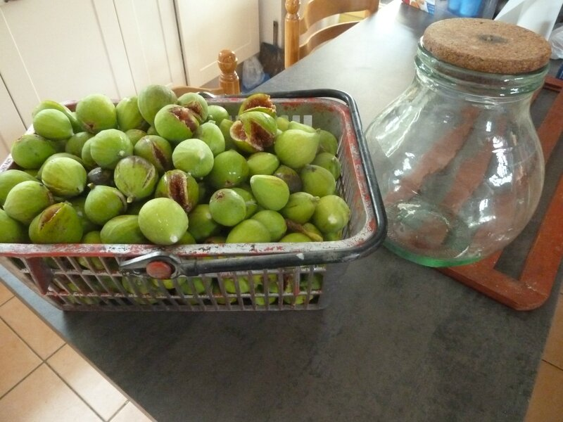 26-figues (4)
