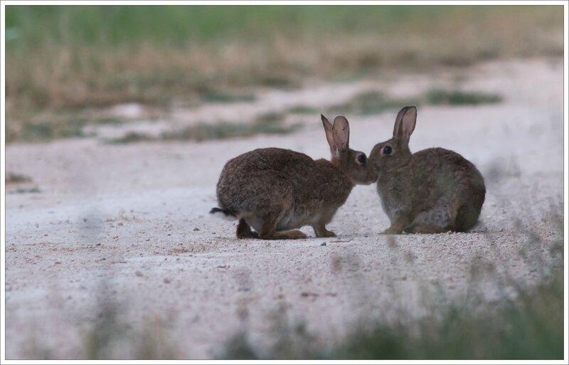 plaine lapins calins 2 110715