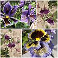 Fleurs mai 2013 (10)