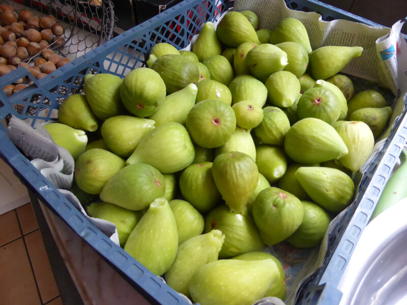 9-figues