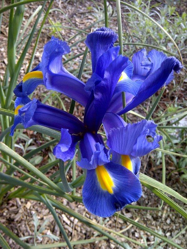 fleurq-mai (3)
