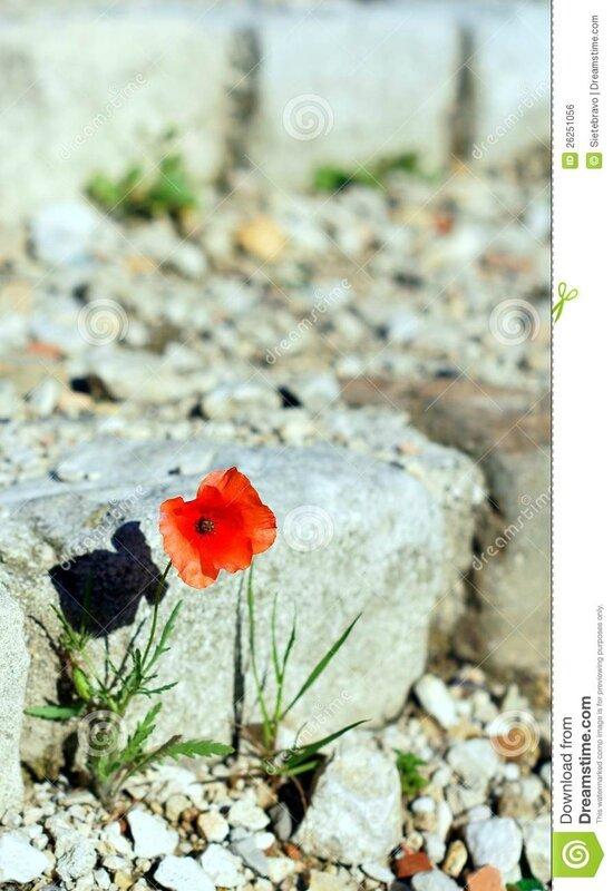 une-fleur-parmi-les-ruines-26251056