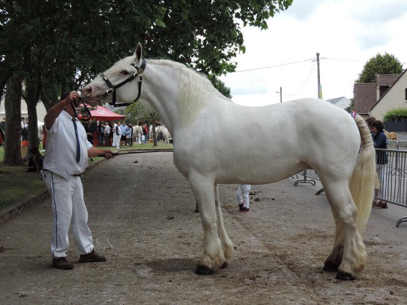Au'la - 14 Juillet 2019 - Concours d'élevage local d'Arneke (59) - 1ere (Non Suitées)