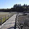 Lac des Settons, entrée de la Cure, passerelle et Cure (58)