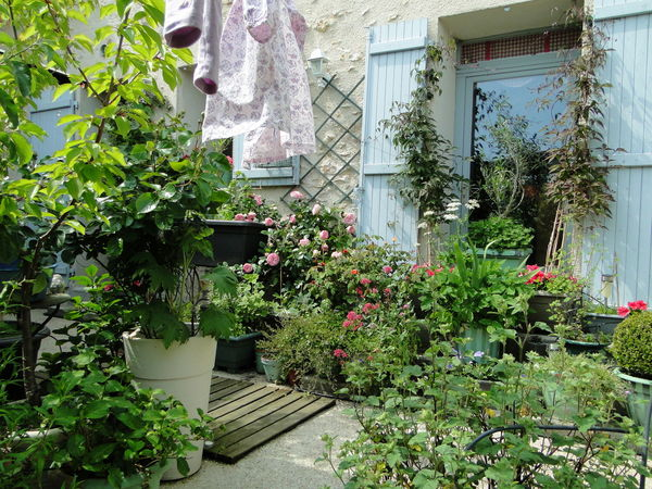 cour_am_nag_e_plantes_et_fleurs_b_ton_lav_