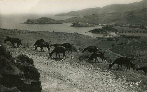 345 Vue panoramique - Plage des Paulilles