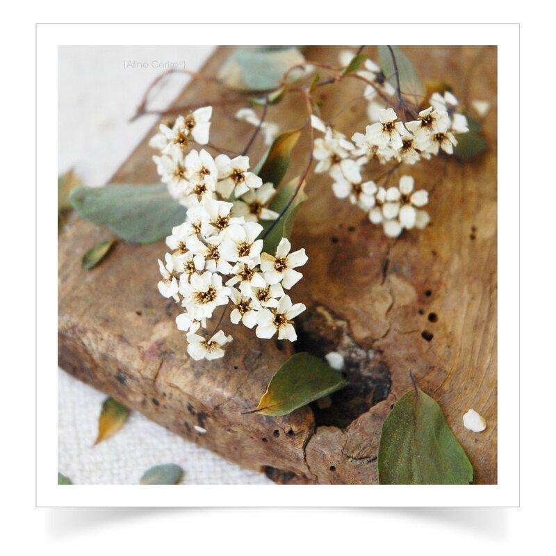 Détail-fleurs-séchées-1