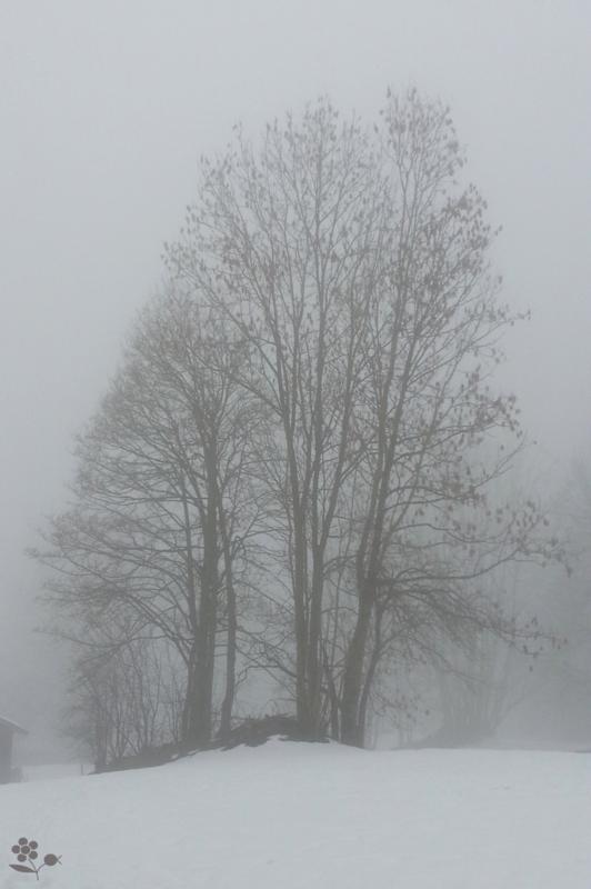 Forêt & brouillard_4