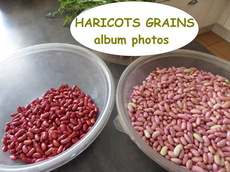 haricots grains-album photos