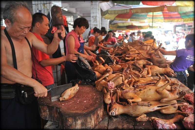 massacre_yulin_3