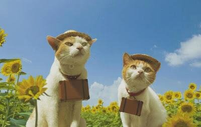 Chats voyageurs
