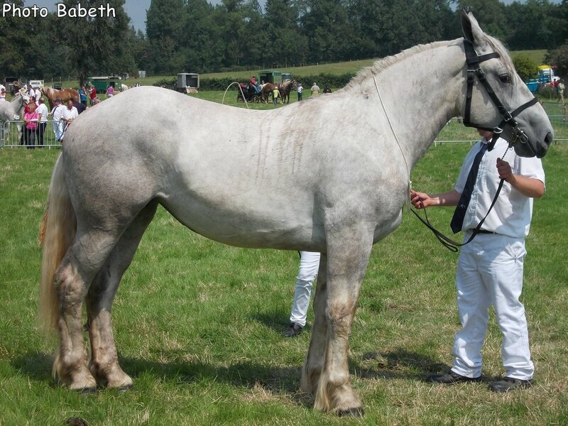 COLOMBE du Cygne - Concours National - Samer (62) - 26 juillet 2014 - 5e (2 ans petites tailles)