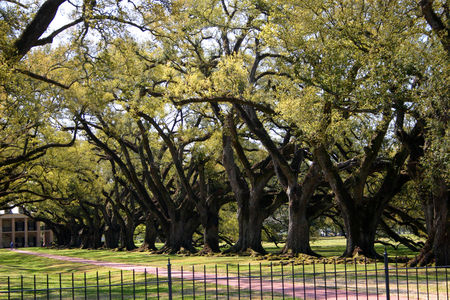 Louisiana_Oak_Alley_16