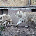 Amneville zoo 27
