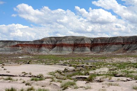 Petrified_Forest_19