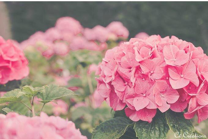 fleurs_jardin-20