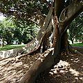 029 - The Royal Botanic Garden