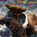 Paxillus involutus 1